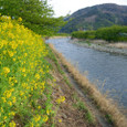 早春の河津川2