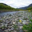 早春の河津川1